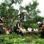 Nhâm Nhi ly Trà Shan Tuyết Cổ Thụ Suối Giàng