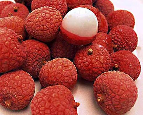 trái cây đặc sản miền bắc